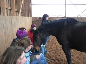 Equine Assisted Growth and Learning Training