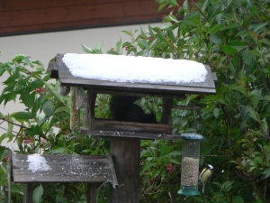 Now I know where the sunflower seeds are going!